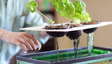 The Aquaponics Project, a Pitt student group Wins Big