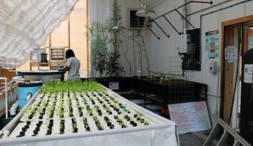 Year of Engagement Grant Helps Pitt Hydroponics Club Expand Urban Greenhouse in a Food Desert